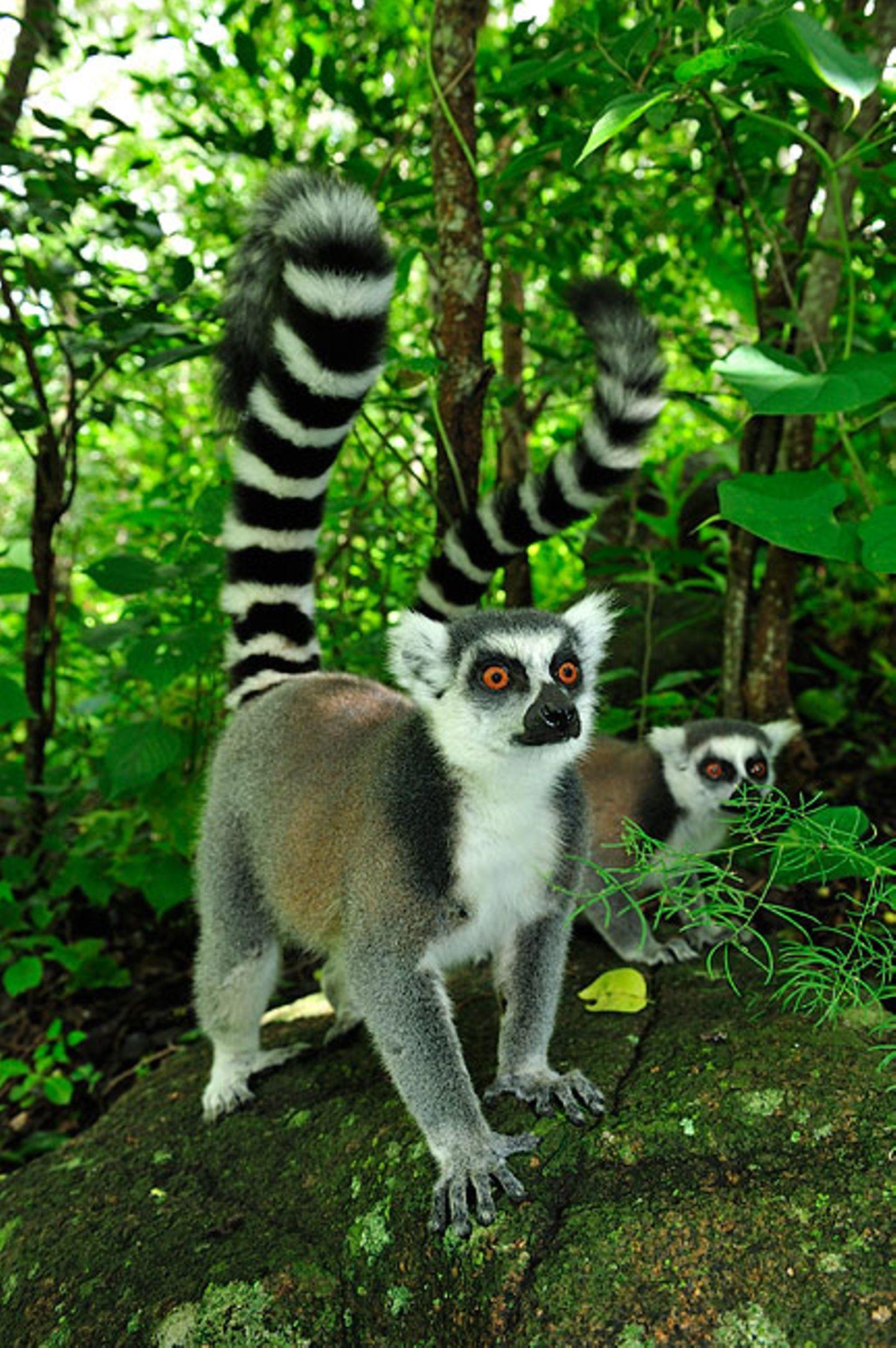 Süd-Madagaskar
