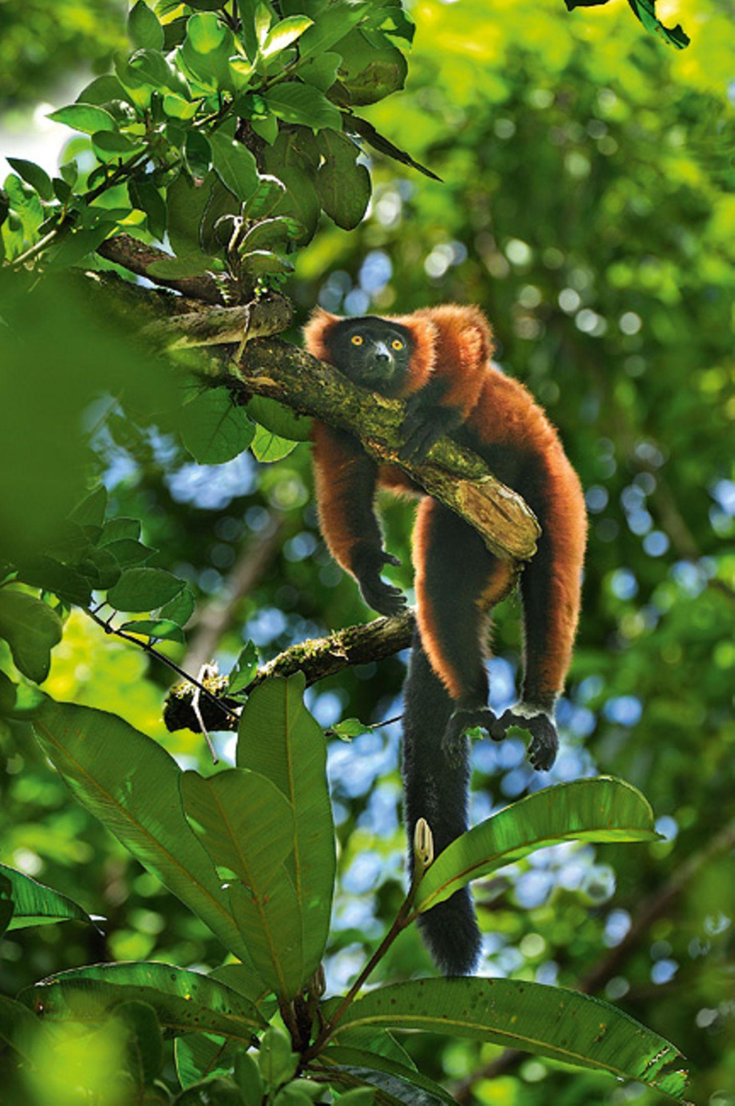 Nordost-Madagaskar