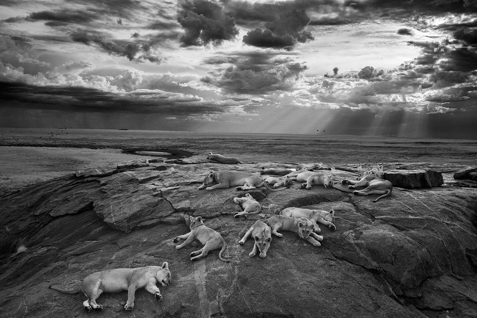 Fotopreis: Wildlife Photographer of the Year 2014