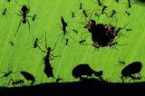 Ameisen. Bence Máté, Ungarn 2010