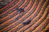 Palmöl statt Regenwald. Daniel Beltrá, Spanien/USA 2010