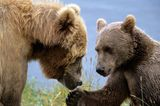 Trend-Reiseziel 2015: Insel Kodiak in Alaska, USA