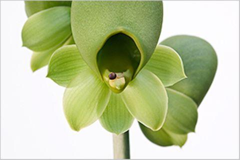 Orchideen: Extravaganzen der Botanik