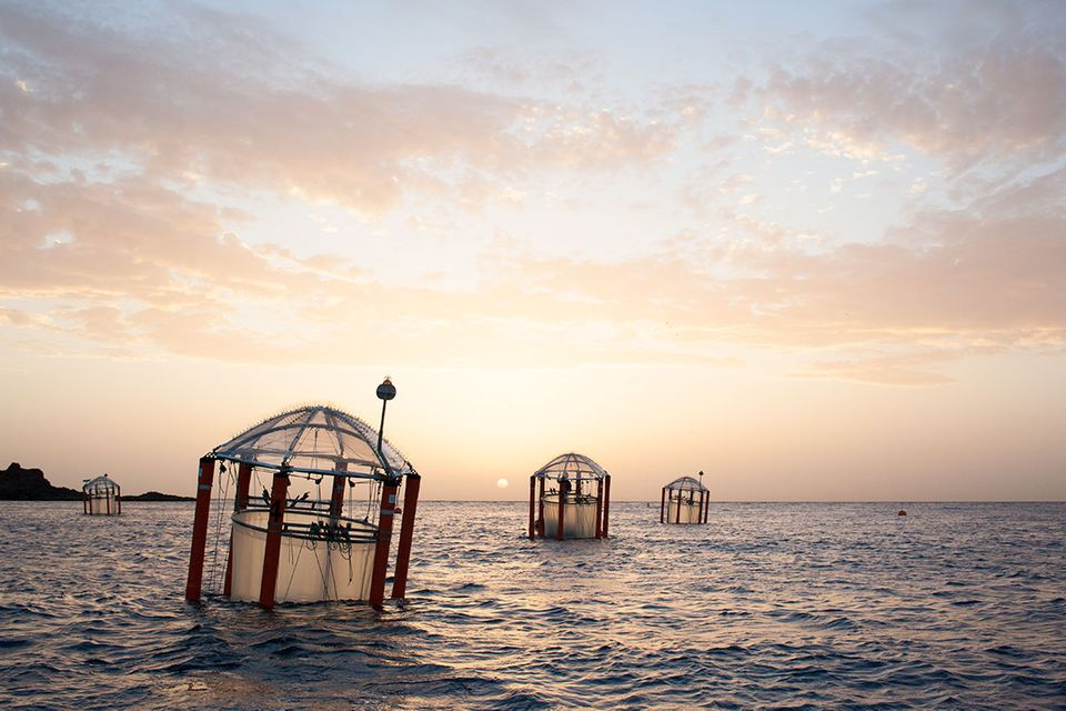 Meereskunde: Der Ozean wird sauer
