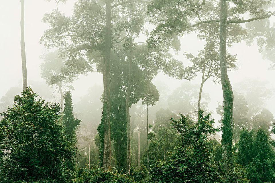 Fotografie: Die Zukunft des Waldes