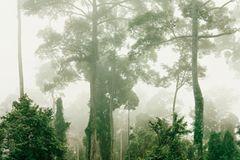Primärwald, Malaysia