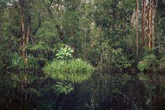 Primärer Sumpfwald, Kalimantan, Indonesien