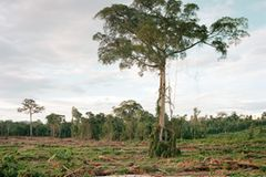 Rodung von Primärwald, Kalimantan, Indonesien