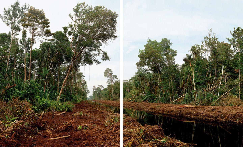 Rodung auf Sumatra