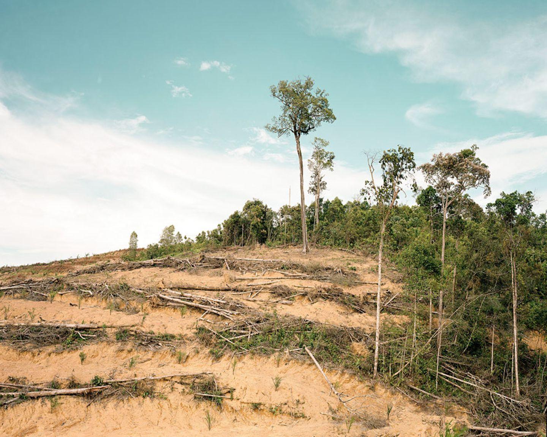 Rodung in Zentralkalimantan/Indonesien