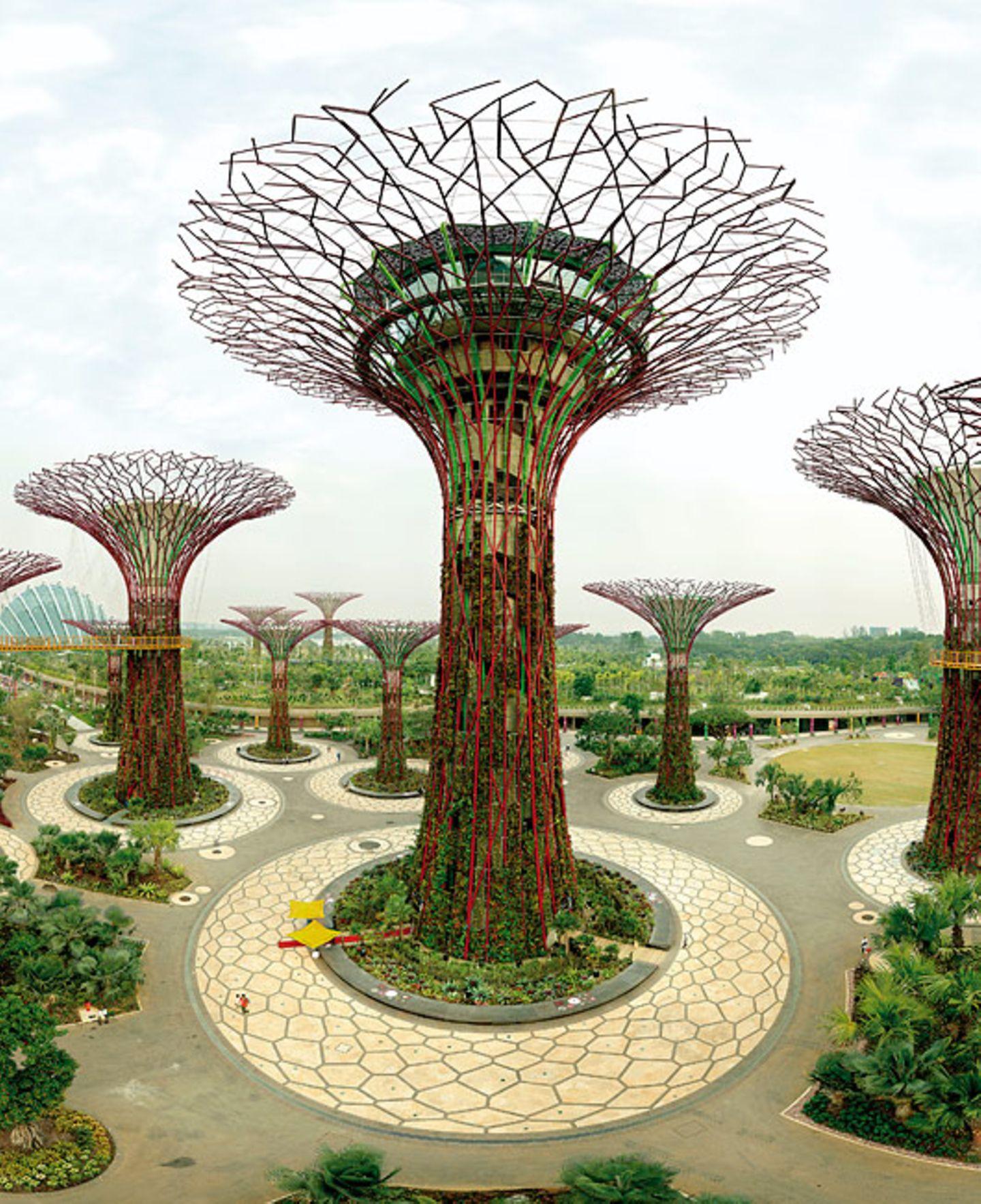 Supertree Grove, Singapur