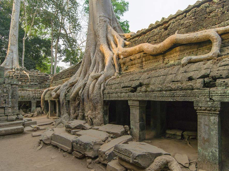 Tempelanlage Ta Prohm, Kambodscha