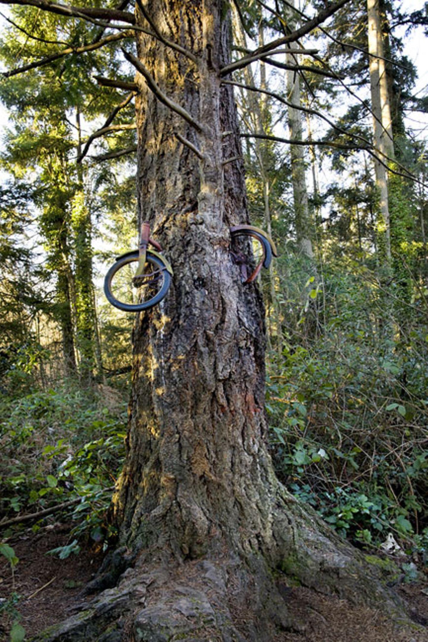 "Das ""Tree Bike"" von Vashon Island, Washington"