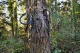 "Das ""Tree Bike"" von Vashon Island, Washington"