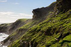 "Hütehunde in Neuseeland: ""Muster over the Tasman Sea, 2014"""