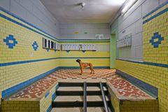 Plattenbau mit Hund