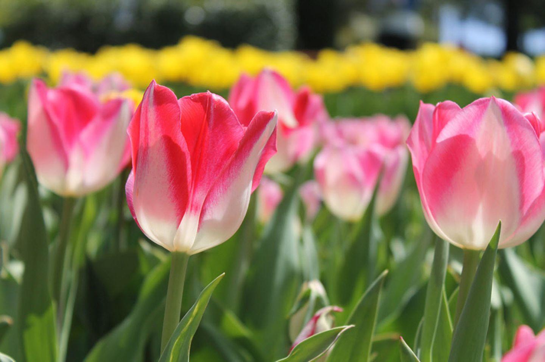 GEO Leserfoto: Die besten Leserfotos: April 2015 - Bild 9
