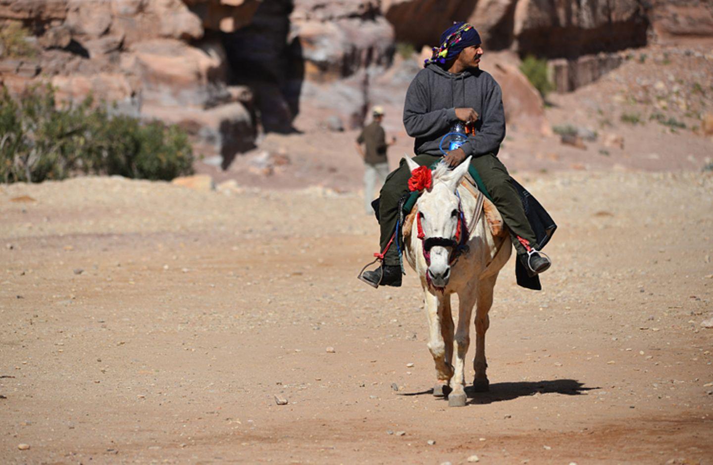 Vier Pfoten: Jordanien: Hilfsprojekt für Esel und Pferde