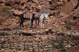 Vier Pfoten: Jordanien: Hilfsprojekt für Esel und Pferde - Bild 3