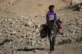 Vier Pfoten: Jordanien: Hilfsprojekt für Esel und Pferde - Bild 4