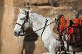 Vier Pfoten: Jordanien: Hilfsprojekt für Esel und Pferde - Bild 5