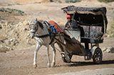 Vier Pfoten: Jordanien: Hilfsprojekt für Esel und Pferde - Bild 6