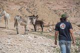 Vier Pfoten: Jordanien: Hilfsprojekt für Esel und Pferde - Bild 10