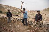Vier Pfoten: Jordanien: Hilfsprojekt für Esel und Pferde - Bild 11