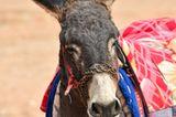 Vier Pfoten: Jordanien: Hilfsprojekt für Esel und Pferde - Bild 12