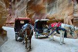 Vier Pfoten: Jordanien: Hilfsprojekt für Esel und Pferde - Bild 13