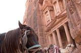 Vier Pfoten: Jordanien: Hilfsprojekt für Esel und Pferde - Bild 19