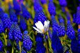 GEO Leserfoto: Die besten Leserfotos: Juni 2015 - Bild 10