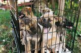 Tierschutz in Rumänien: Jedes Hundeleben zählt - Bild 7