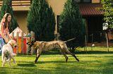 Tierschutz in Rumänien: Jedes Hundeleben zählt - Bild 12