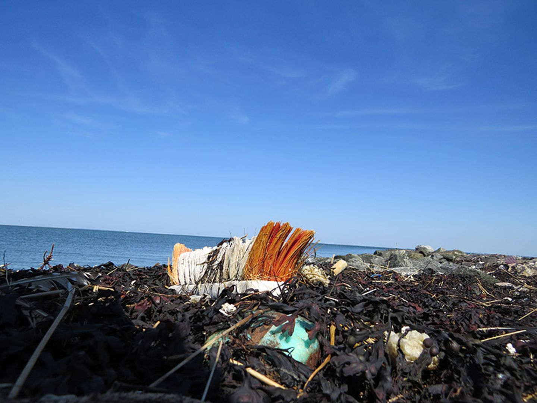 Umweltschutz: Strandgut mal anders - Bild 7
