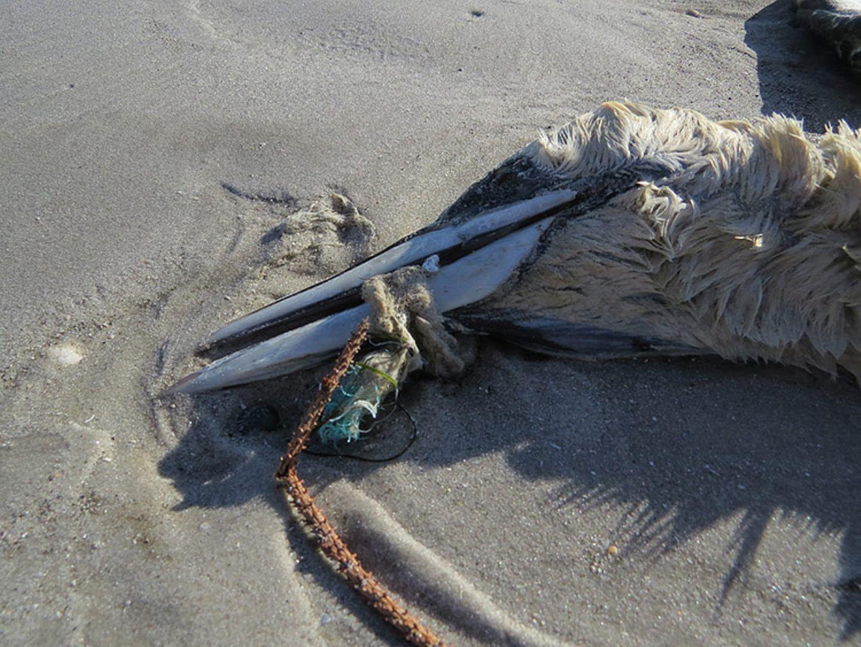 Umweltschutz: Strandgut mal anders - Bild 10