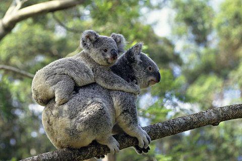 Erstaunliches Tierreich: So seltsam sorgen manche Tiere für Ihre Familie und Vermehrung