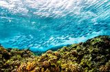 Azoren, Atlantik