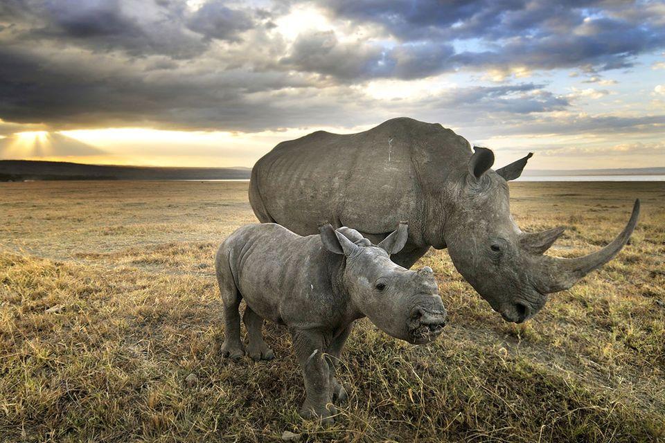 """Artenvielfalt: Was wurde aus den """"Letzten ihrer Art""""?"""