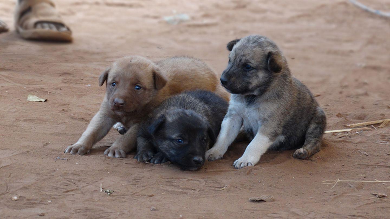 Tierärzte weltweit: Fotostrecke: Botschafter für den Tierschutz