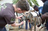 Tierärzte weltweit: Fotostrecke: Botschafter für den Tierschutz - Bild 4