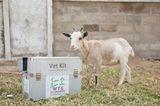 Tierärzte weltweit: Fotostrecke: Botschafter für den Tierschutz - Bild 10