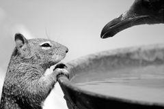 Grauhörnchen und Möwe