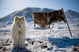 Winterlager eines Rentierzüchters in Tschukotka