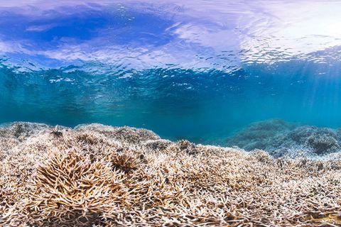 Korallensterben: Hitzetod im Riff