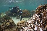 Korallen auf Google Street View