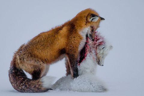 Wildlife Photographer of the Year: Die besten Tierfotos 2015
