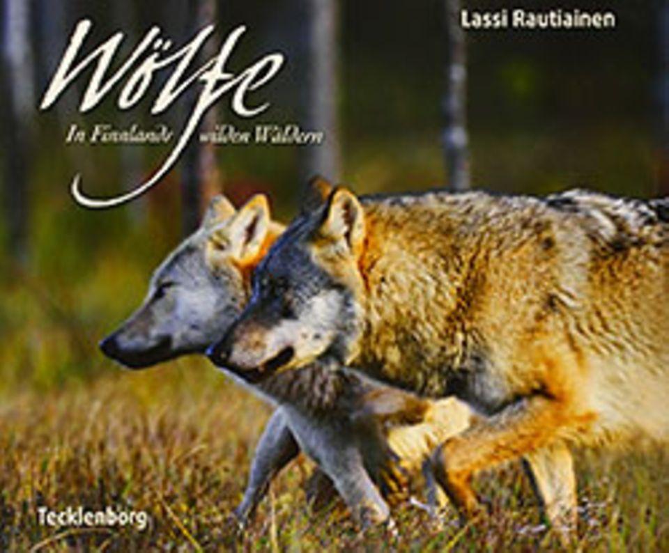 Ungewöhnliche Freundschaft: Bär und Wolf streifen gemeinsam durch die Wälder