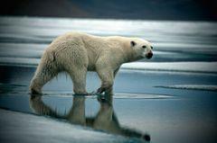 Polare Welten