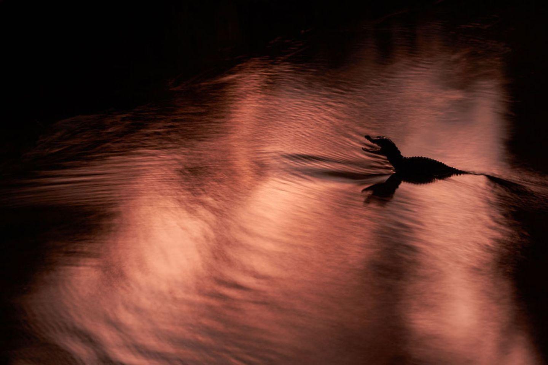Ruhe im Fluss (Andere Tiere)